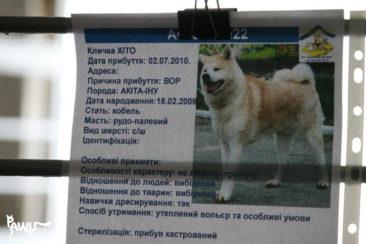 Borodianka_02