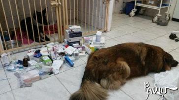 Medikamentenspende für Kiew