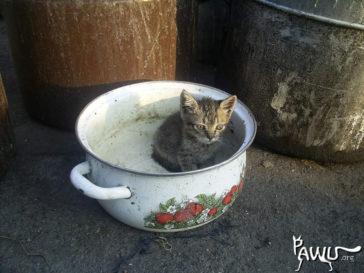 Hilfe für das Tierheim Dimitrov im Kriegsgebiet