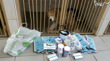 Tierkliniken in Kiew