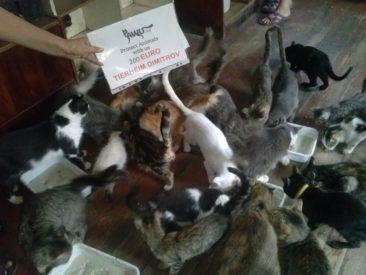 Hilfe für das Tierheim Dimitrov