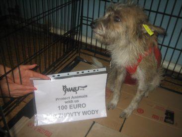 100€ für Zhovty Wody