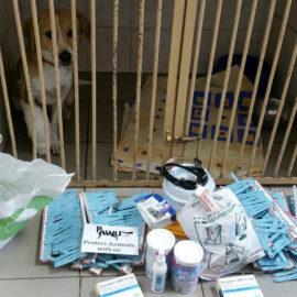 Hilfe für die Tierklinik-Kiew