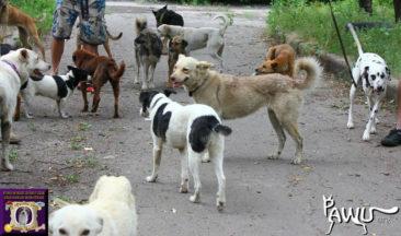 300 Hund im Kriegsgebiet brauchen Hilfe!!!