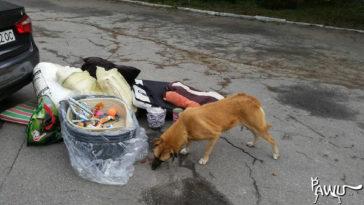 Hilfe und Spendentransport für Tierheim Borodianka