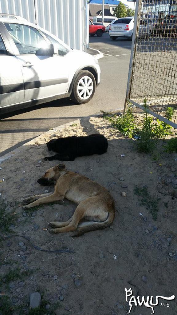 Straßentiere in der Ukraine