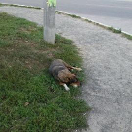 ESC Grund für Hundetötung in Kiew?
