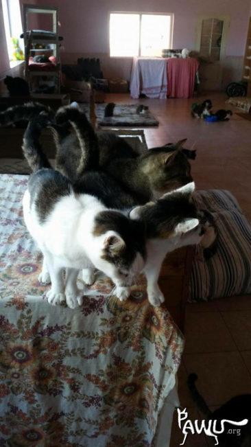 Spendentransport – Übergabe Tierheim Sirius