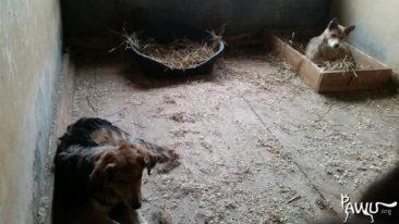 städtische Tierheim in Borodianka