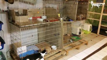 Übergabe  Katzenheim + Klinik