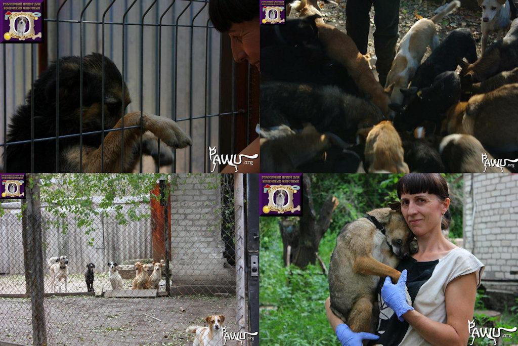 Gorlovka, im Kriegsgebiet der Ukraine, braucht Hilfe!!!