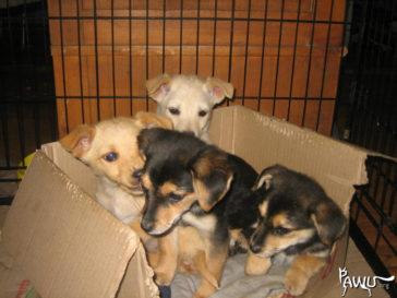 Die Tierschützer in Zhovty Wody brauchen dringend unsere Hilfe!!!!!