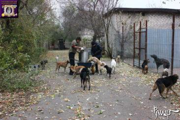 Tierheim Gorlovka im Kriegsgebiet der Ukraine