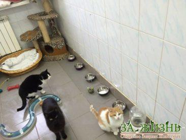 Kliniken Kiew
