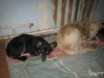Die Tierschützer in Zhovty Wody brauchen dringend unsere Hilfe.