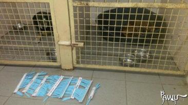 Tierklinik Kiew