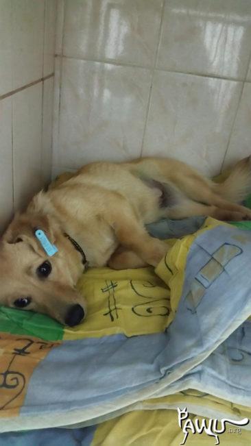 Spendenübergabe städtische Tierklinik in Kiew