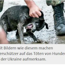 Falsche Bilder auf Petitionen gegen Hundetötung
