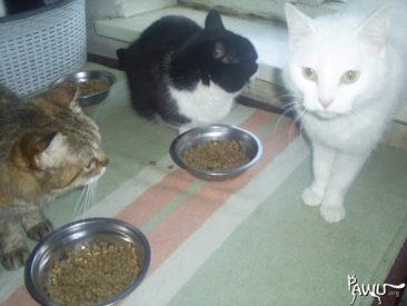 Spenden für das Tierheim Dimitrov Ukraine