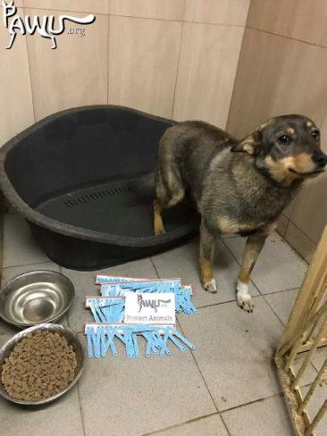 Ohrenmarken für die Tierklinik in Kiew
