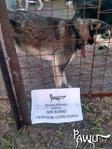Spendenübergabe Gorlovka – Kriegsgebiet-Ukraine