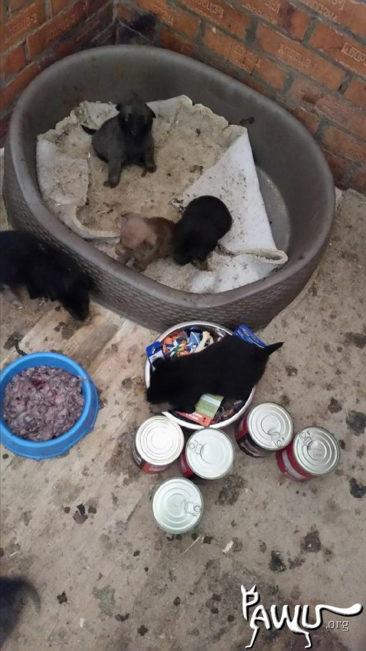 Welpenüberraschung im Tierheim Borodianka / Ukraine