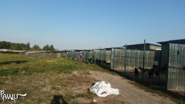 Futterspende für Andrea Cisternino / Kiew