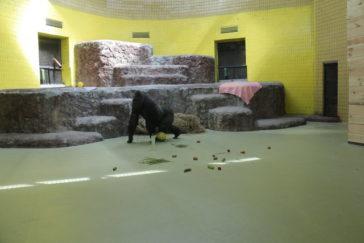 Mehr Platz für Gorilla Toni aus Kiew