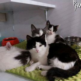 Bewohner des Katzenheimes in der Klinik in Kiew