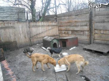 Tierheim Dimitrov – Ukraine (Kriegsgebiet)