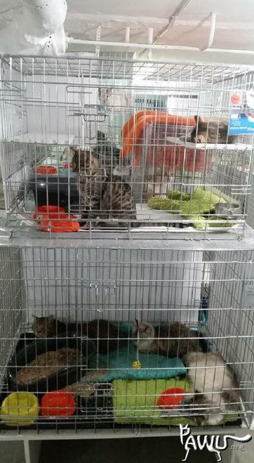 Übergabe Katzenheim Kiew