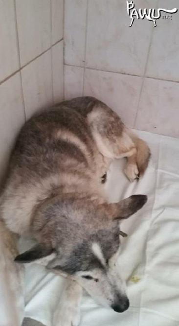 Übergabe städtische Tierklinik Kiew