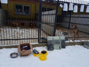 Sachspenden – Städt. Tierheim Borodianka in Kiew