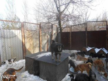 Dimitrov – Kriegsgebiet-Ukraine