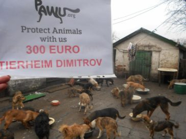 Sofort – Hilfe für Dimitrov-Kriegsgebiet Ukraine