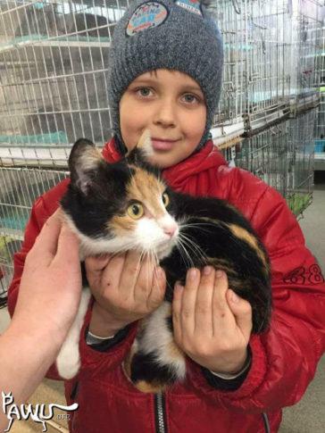 Spenden für das Katzenheim / Kiew