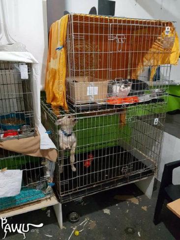 Spenden für das Katzenheim