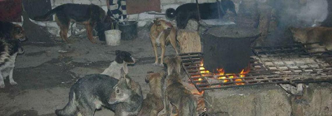 Tierheim Gorlovka - im Kriegsgebiet der Ukraine