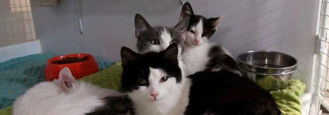 Katzenheim Kiew - Katzen werden gerettet, aufgepäppelt, vermittelt