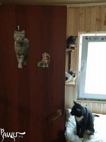 Spendenübergabe Tierheim Lora