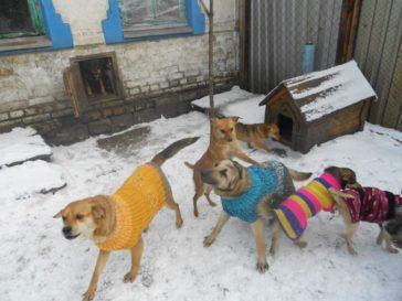 Spenden für das TH Dimitrov (Kriegsgebiet-Ukraine)