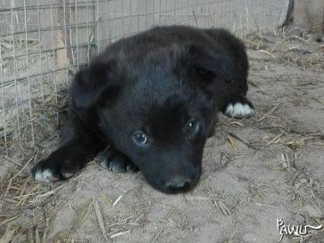 600 Tierheimtiere brauchen dringend Hilfe!