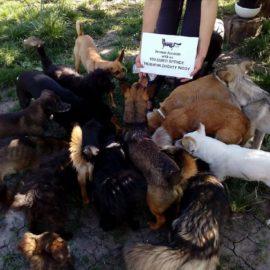 Eine kleine Spende für die Tierschutzorganisation in Zhovty Wody ❤