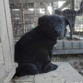 Ukraine – 600 Tiere brauchen dringend Hilfe!
