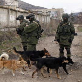 Tierrettung in Katastrophengebieten – Neuer Hilfsfonds des ETN, in zusammenarbeit mit PAWU (für die Ukraine)