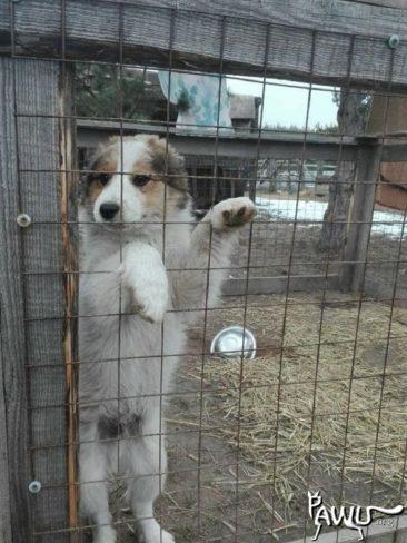 600 Tiere brauchen dringend Hilfe