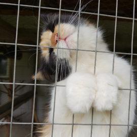 Spendenübergabe Tierheim Best Friends – Ukraine ♥