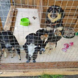 Spenden für das Tierheim Lora / Ukraine ♥
