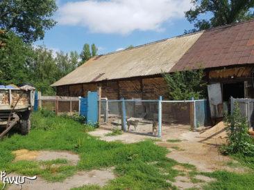 Tierheim Lora / Ukraine
