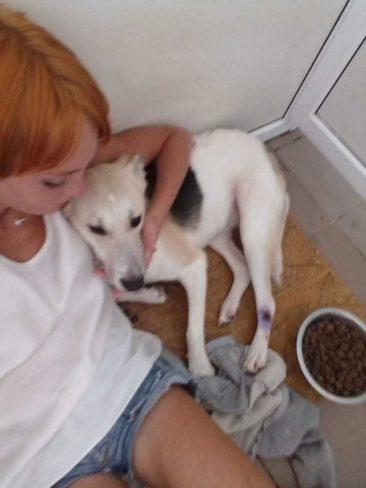 Hunde im städt. Tierheim ermordet!!!